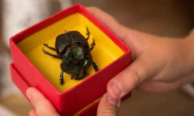 o-escaravelho-do-diabo-filme-minha-vida-literaria6